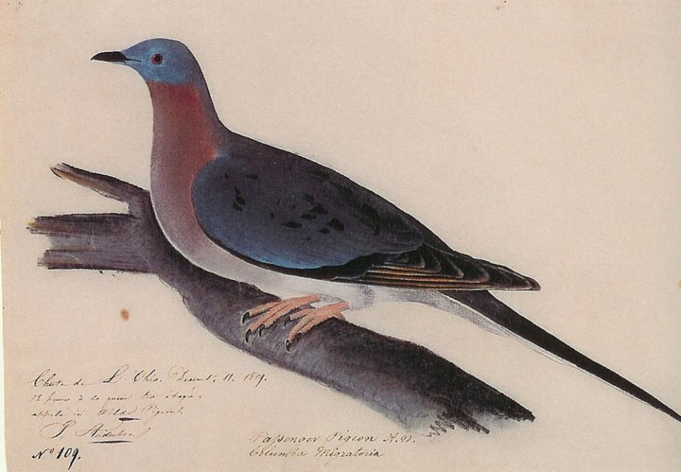 Slaughtered to extinction: Passenger pigeons in Michigan