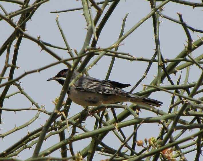 Enigmatic birding