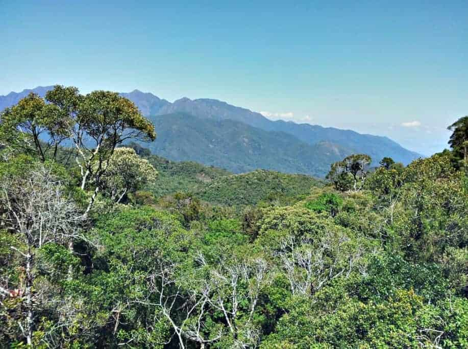 Birding in Brazil – a short tour to the Itatiaia National Park