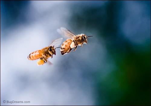 Pollen Smugglers