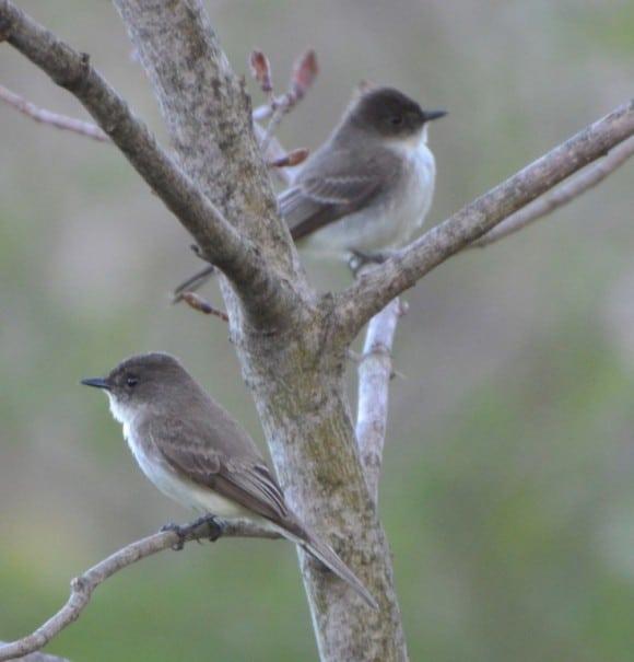 Rituals of Spring ~ Returning Seasonal Residents