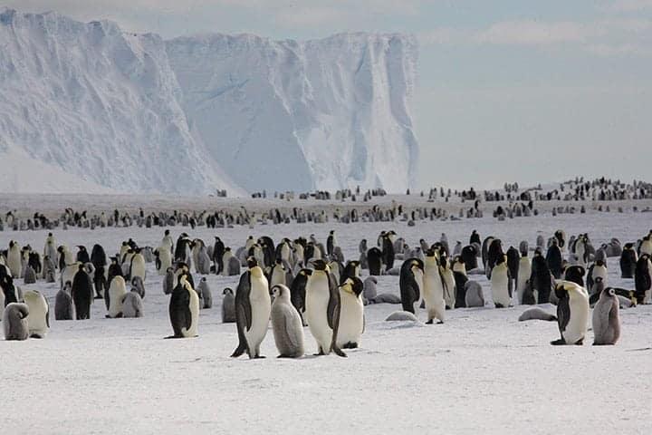 Eye-In-Sky Helps Count Penguins