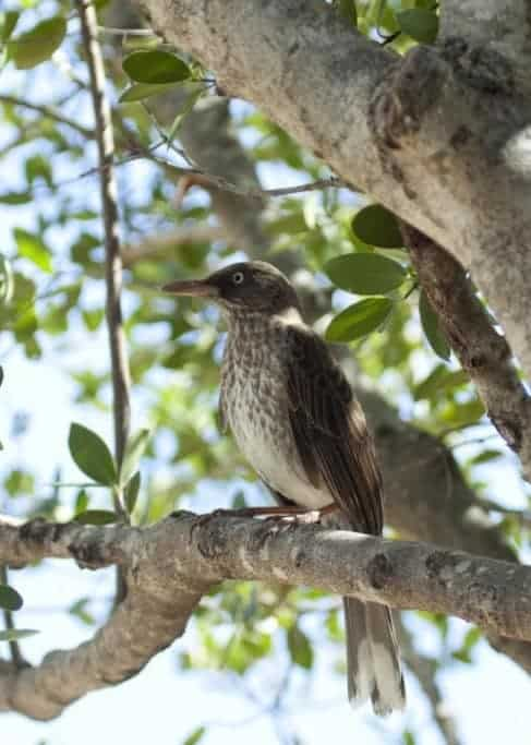 Birding on the Beautiful Island of St. John
