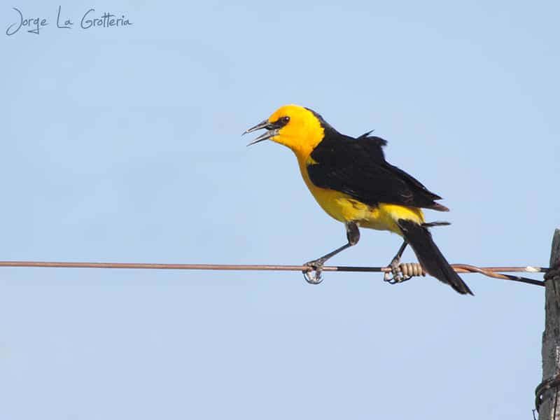 Birding Argentina: early fall in Southern Entre Ríos