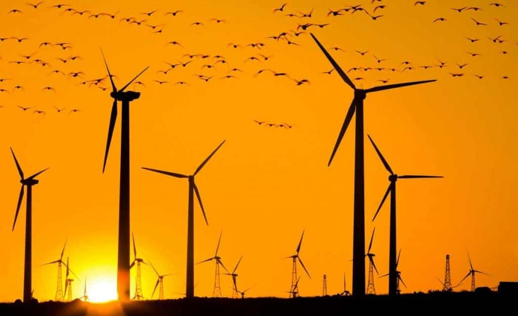 New Voluntary Wind Guidelines Will Fail to Protect Birds