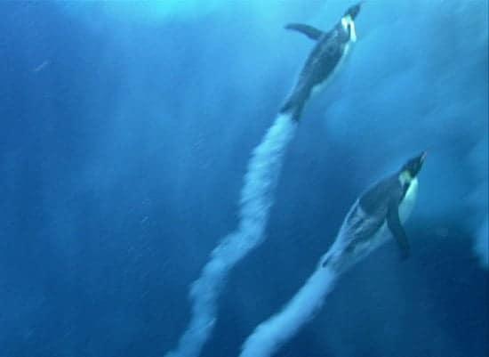 Penguins Fly Underwater Like Supercavitating Rocket Torpedoes