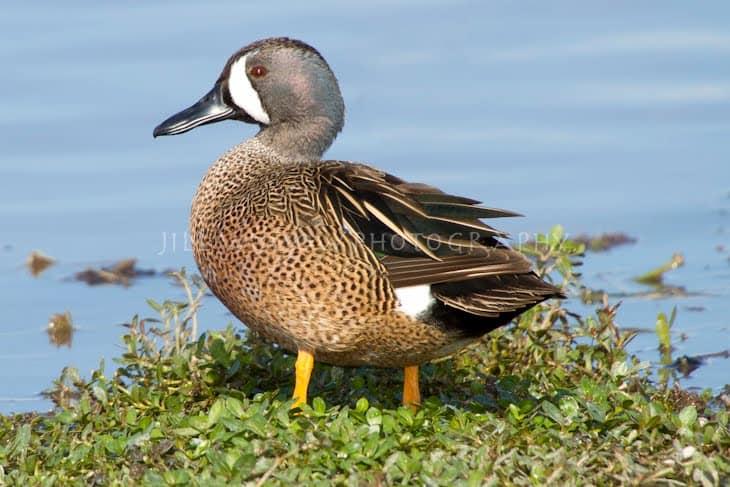 Duck It