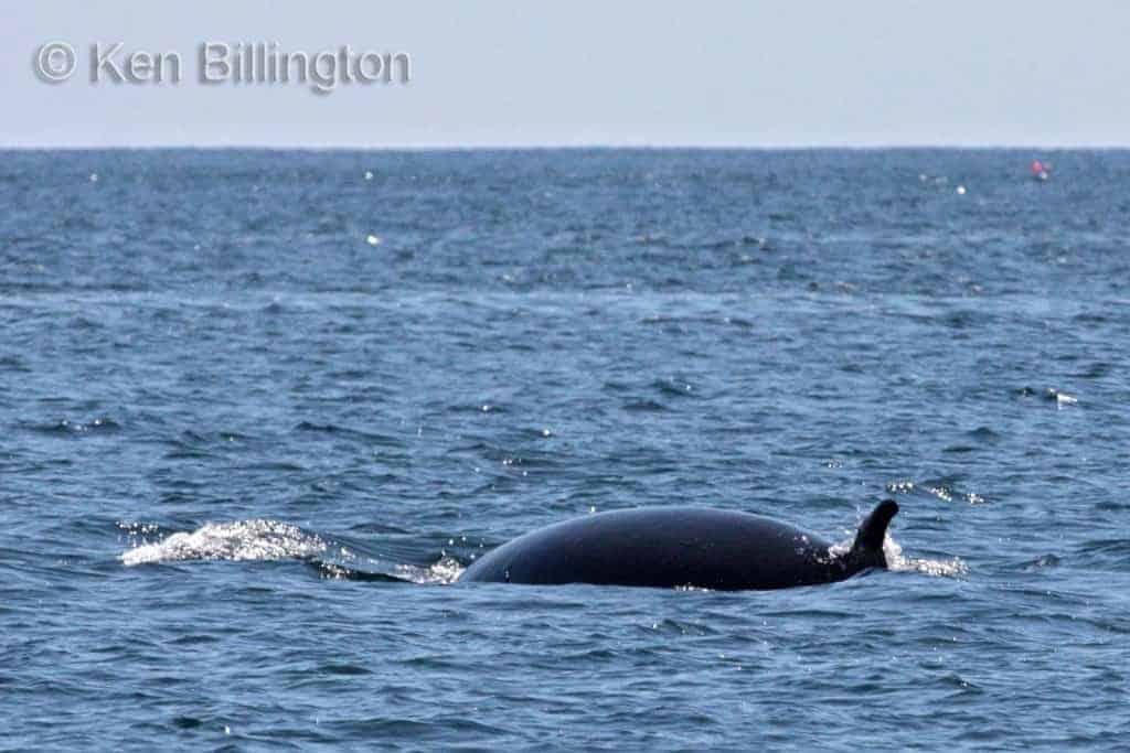 Wildlife of Roaringwater Bay