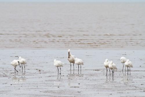Bird Tour Report