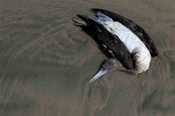 Dead Dolphins and Birds Causing Alarm in Peru