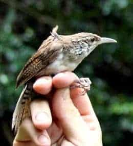 New Species of Bird Identified in Colombia