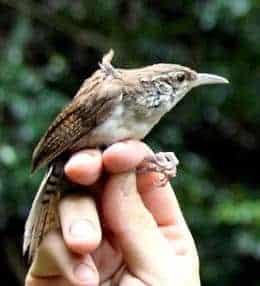 New Species of Bird Identified in Colombia