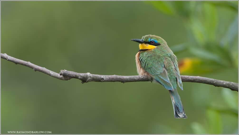 Raymond's Birds of Tanzania Part I