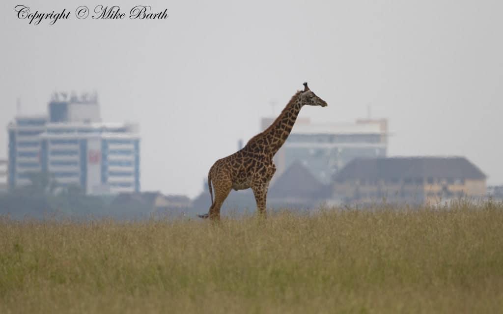 2 Days in Nairobi (Day 1)