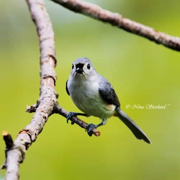 Spring Migration at Point Pelee