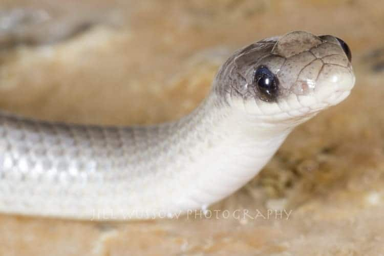 Snake Friends