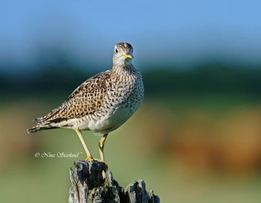 The End of Spring Birding..