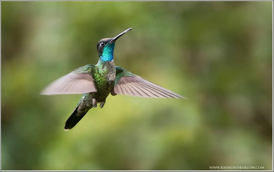 Raymond's Costa Rica Birds