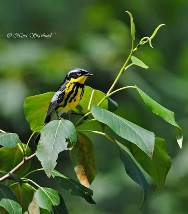 June Birding!