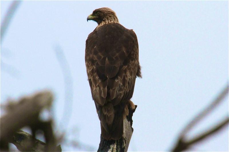 Orange County California Birds Of Prey Focusing On Wildlife