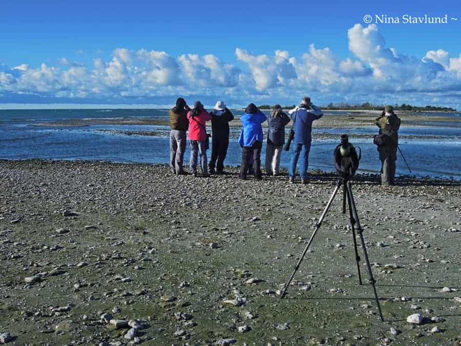 Birding Prince Edward Point & Presqu'ile Provincial Park – Canada