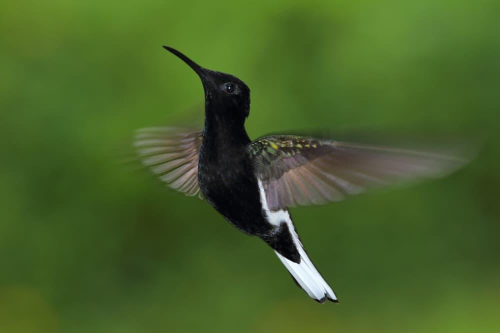 Hummingbird Photo Tours