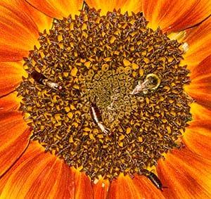 The Sunflower Bed & Breakfast