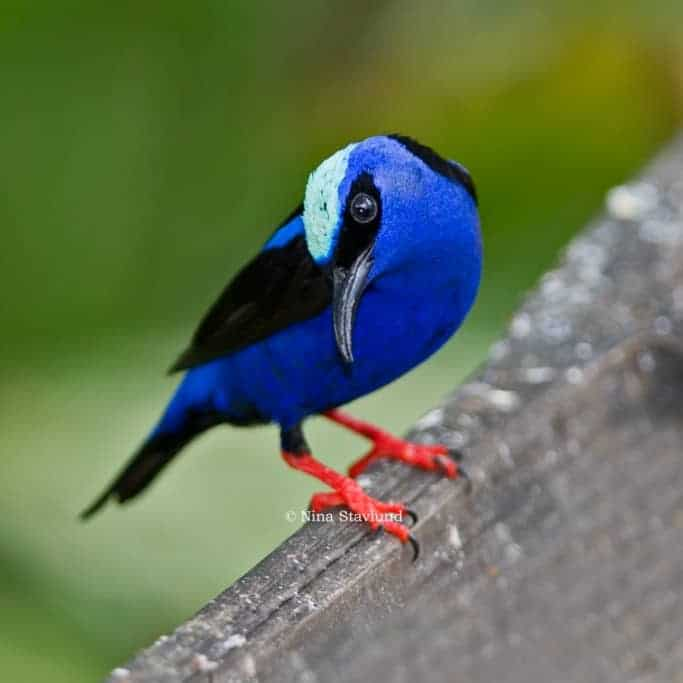 Wildlife Photo Adventure in Costa Rica!