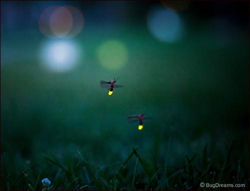 Memories of Tiny Fireballs