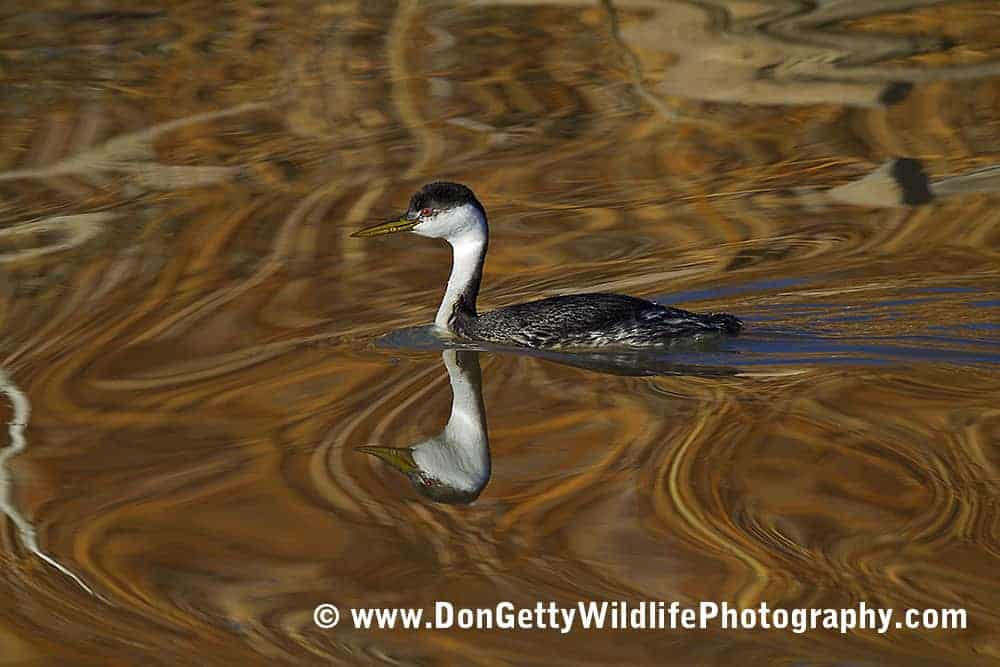 Bosque del Apache NWR by Don Getty – Part 3