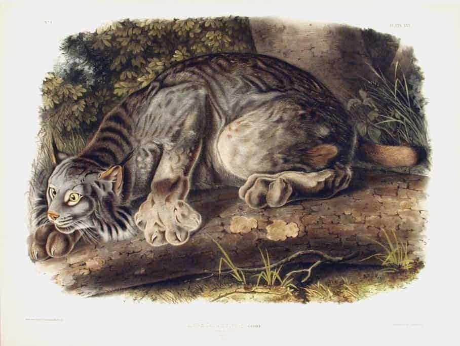 Rare Art Works by John James Audubon at Auction on December 5th Part II