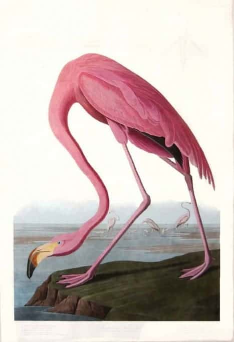 Rare Art Works by John James Audubon at Auction on December 5th Part I