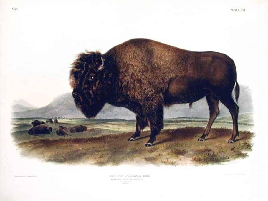 Rare Art Works by John James Audubon at Auction on December 5th Part V
