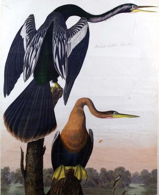 Rare Art Works by John James Audubon at Auction on December 5th Part III