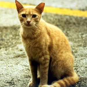 Prince Georges County Council Ignores Slaughter of Wildlife – Chooses Protection of Feral Cats