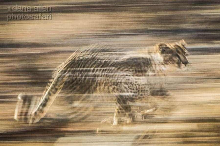 Speed…