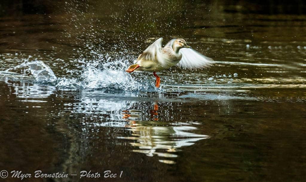 Splash on lift off