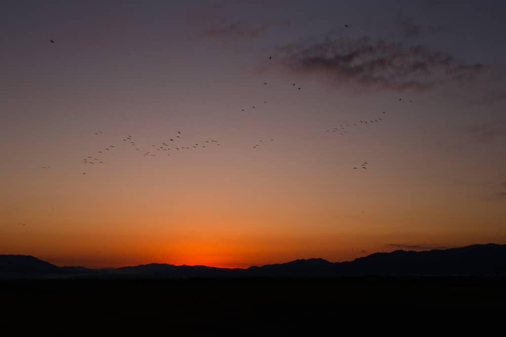 Cranes over Arasaki