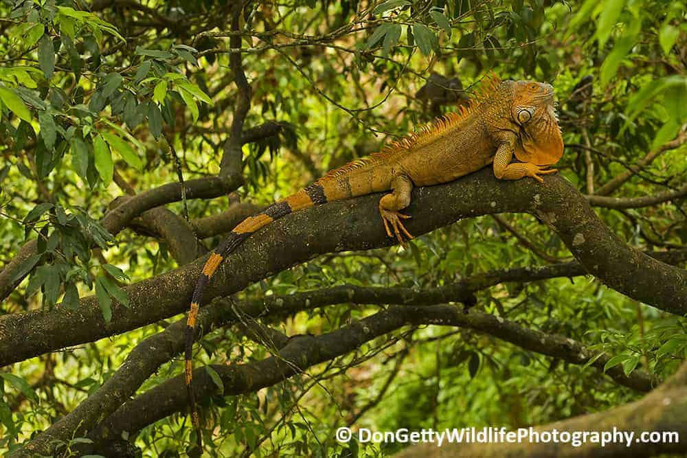 Costa Rica Photo Journal by Don Getty – Part 3 of 3