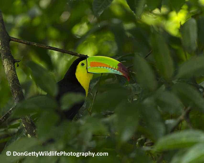 Costa Rica Photo Journal by Don Getty – Part 1 of 3