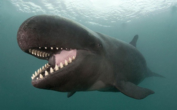 Grins and Fins: Meet the Sociable False Killer Whale