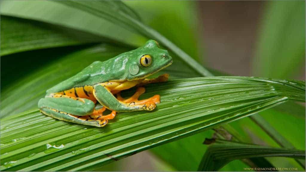 Costa Rica Update