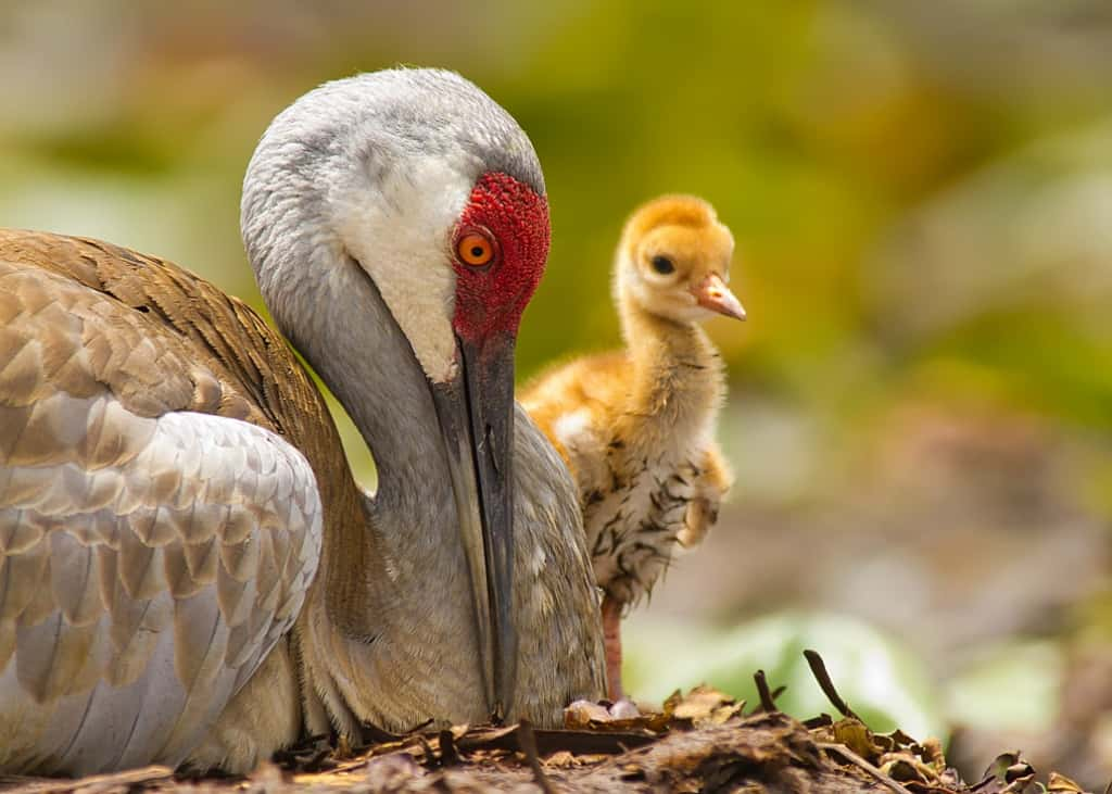 Mother and Child by Scott Helfrich