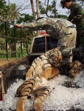 all zoo should be close down captive animals rehabilitate A zoo is a place where animals  from india to toronto, canada, the boat carrying pi, his family, and all the animals of the zoo  biologists and veterinarians are also available to treat sick or injured animals captive.