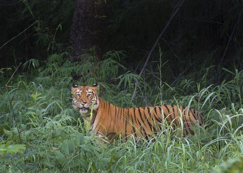Wealth of Wildlife in Tadoba Andhari Tiger Reserve
