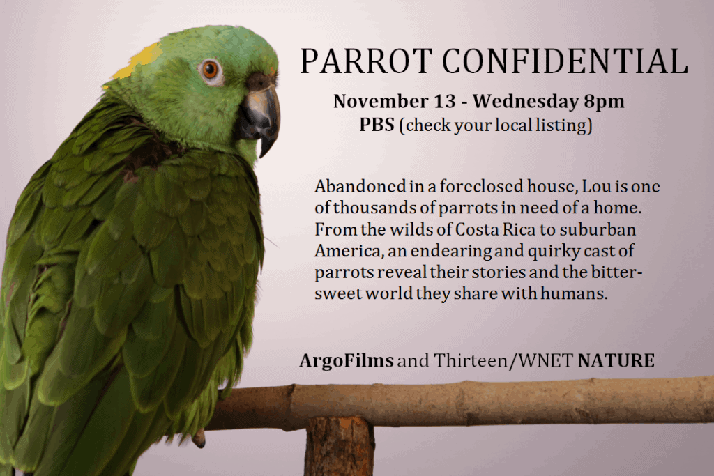 """Parrot Confidential"" debuts on PBS Nature, Wednesday, Nov. 13th at 8pm!"