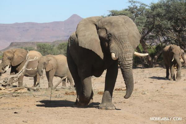 Microsoft founder funds Africa-wide elephant survey to measure ivory poachers' toll