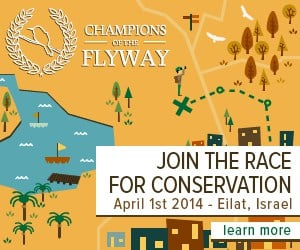 "Join the ""Race for Conservation"" in Eilat Israel"