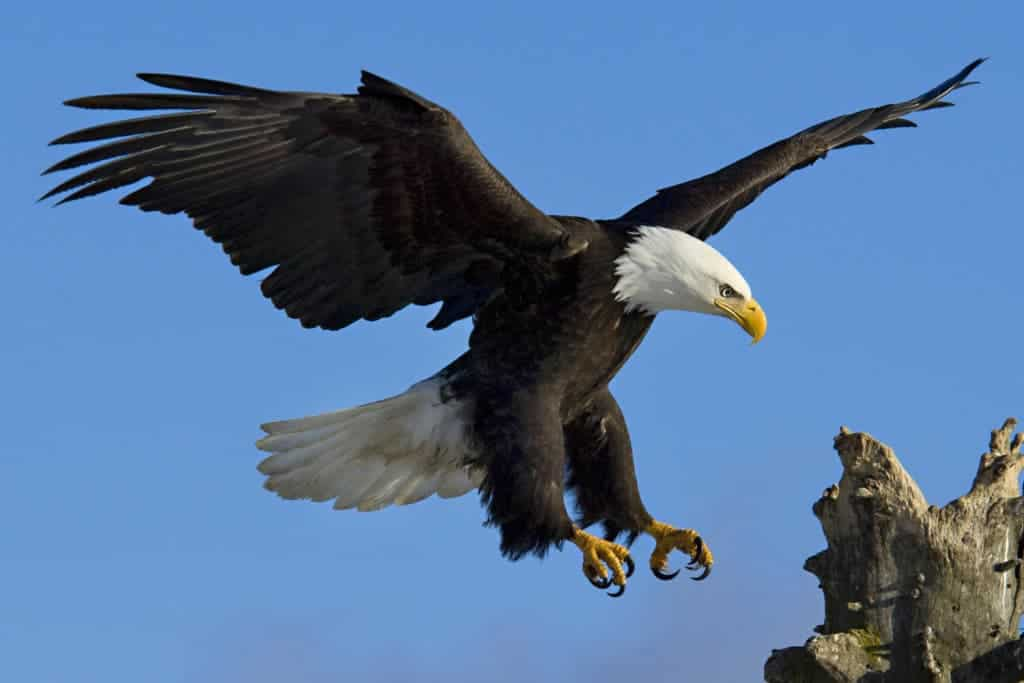 POLL: Should wind energy companies face legal action for killing birds?