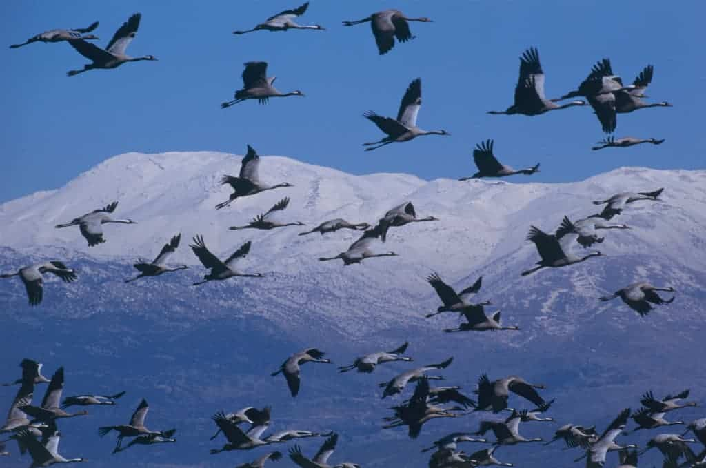 Israel sets an example in the protection of migrating birds